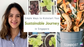 Simple Ways To Kickstart Your Sustainable Journey in Singapore