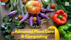 Advanced Plant Care and Composting